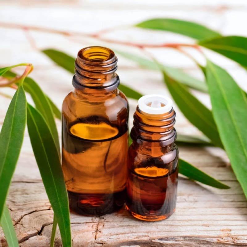 aceite-esencial-de-eucalipto-en-lima-peru